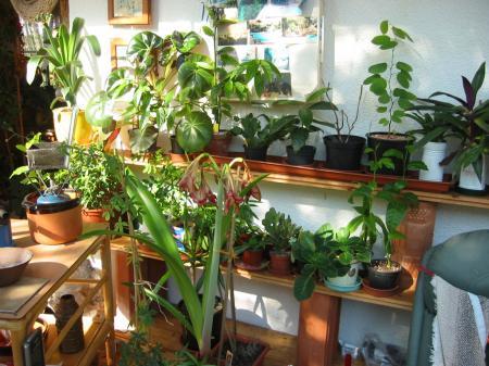 Wie sieht dein pflanzenparadies daheim im haus aus - Luftfeuchtigkeit im wohnzimmer ...