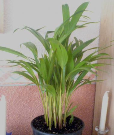 gesammelte unbekannte pflanzenbestimmung pflanzensuche. Black Bedroom Furniture Sets. Home Design Ideas