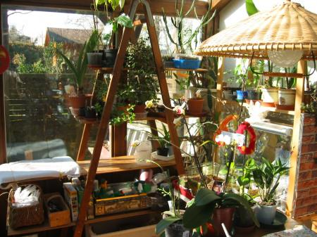 wie sieht dein pflanzenparadies daheim im haus aus treffpunkt stammtisch green24 hilfe. Black Bedroom Furniture Sets. Home Design Ideas