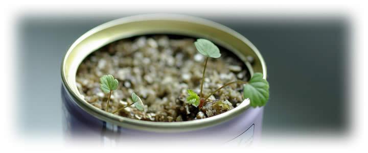 10 Tipps Zur Erfolgreichen Anzucht Von Samen Garten Pflanzen