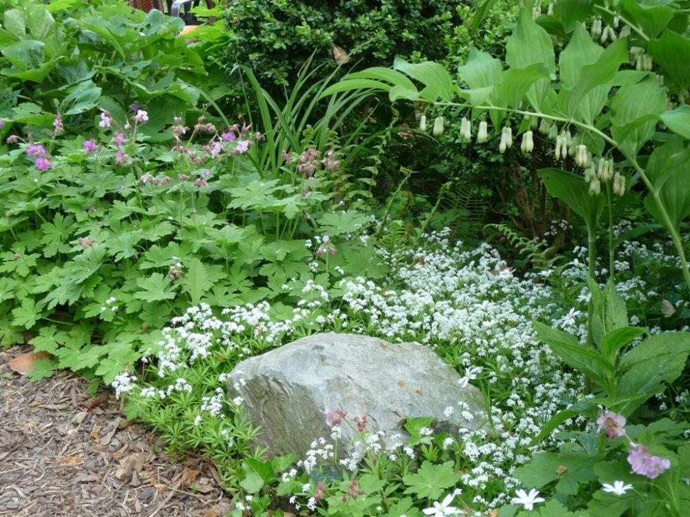 Berühmt Heimische Frühjahrsblüher am Gehölzrand - Pflanzen-Magazin #DL_86