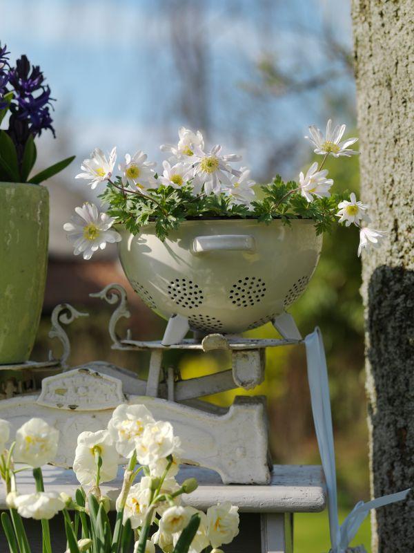 blumenzwiebeln im fr hling nachpflanzen garten pflanzen news green24 hilfe pflege bilder. Black Bedroom Furniture Sets. Home Design Ideas