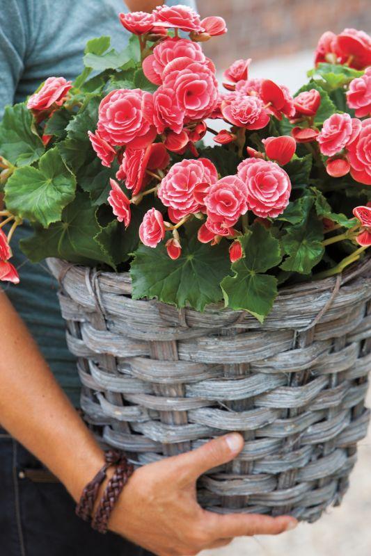 im fr hling den sommer verschenken garten pflanzen news green24 hilfe pflege bilder. Black Bedroom Furniture Sets. Home Design Ideas