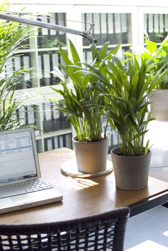 zimmerpflanzen gegen schlechte luft im b ro garten. Black Bedroom Furniture Sets. Home Design Ideas