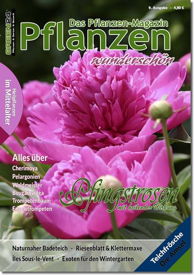 Neomarica die s damerikanische iris pflanzen magazin for Wo pflanzen bestellen
