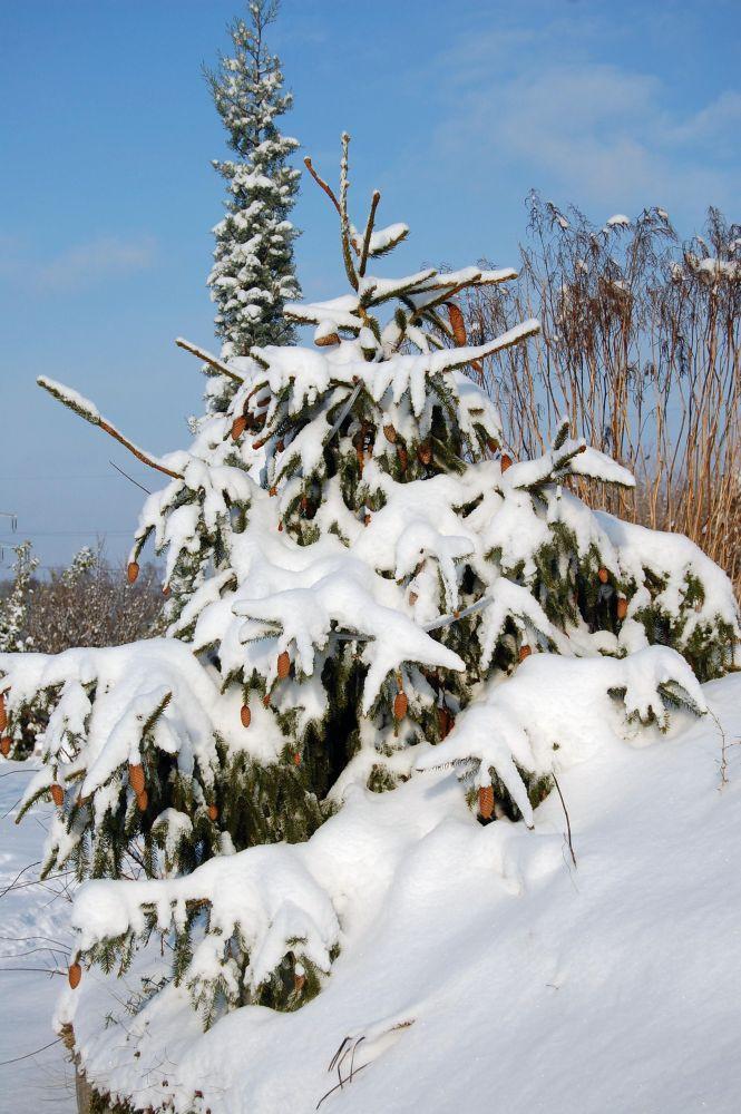 weihnachtsbaum 2010 advent weihnachten green24 hilfe. Black Bedroom Furniture Sets. Home Design Ideas