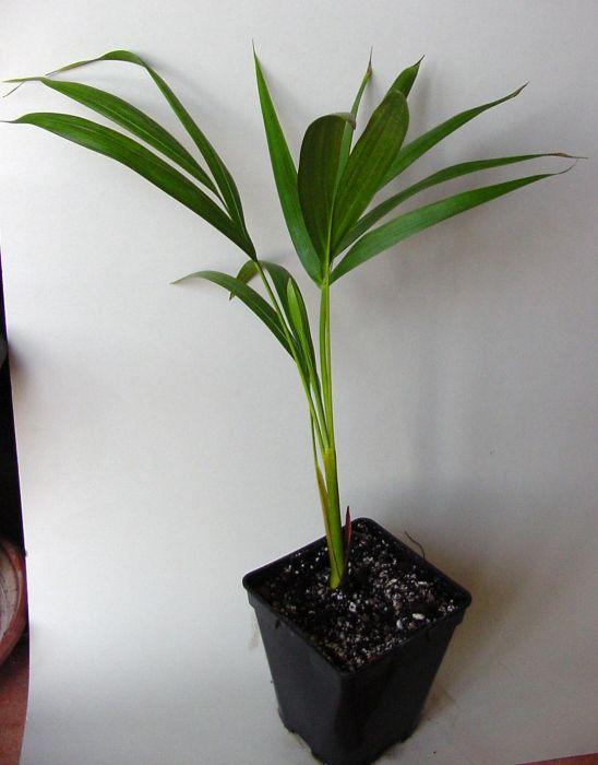 palmenstammtisch i treffpunkt stammtisch green24 hilfe pflege bilder. Black Bedroom Furniture Sets. Home Design Ideas