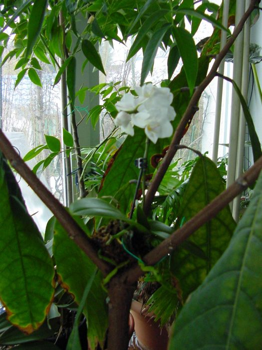 Orchidee Auf Baumstamm Aufbringen Pflanzen Amp Botanik