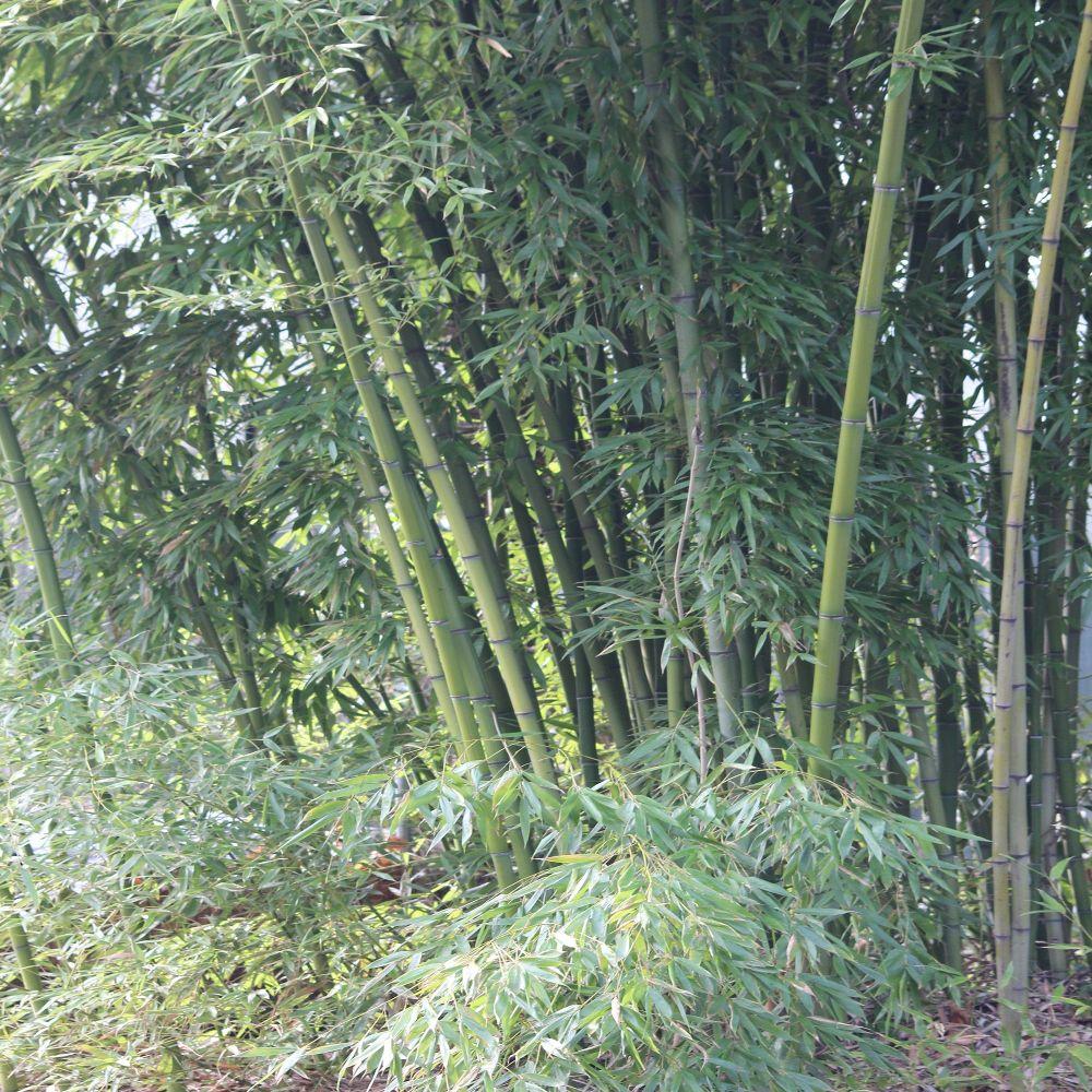 gartenmobel aus bambus pflege interessante. Black Bedroom Furniture Sets. Home Design Ideas