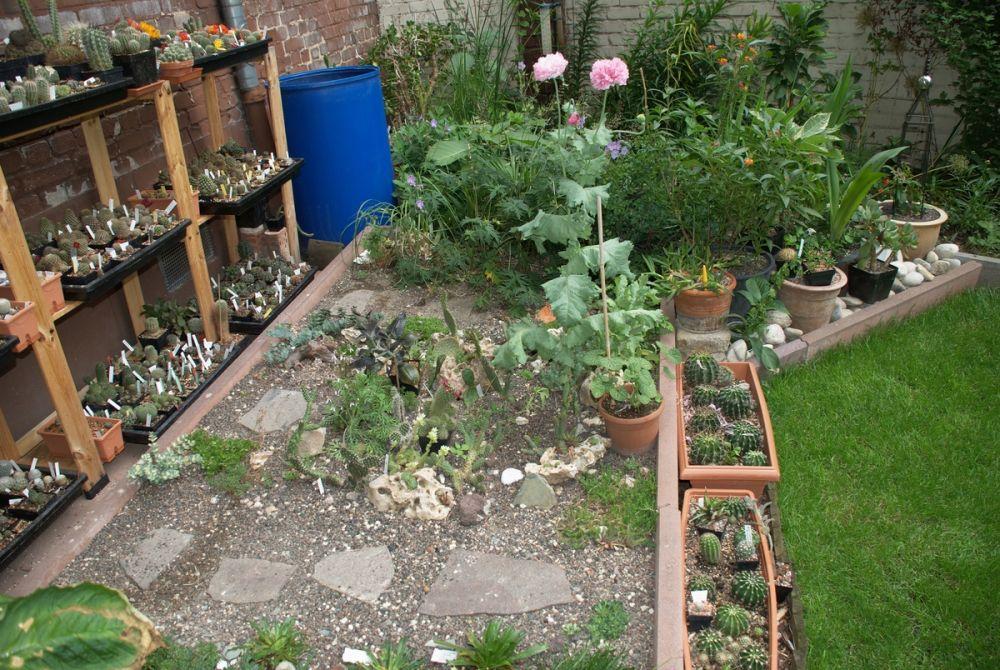 Projekt Kakteen Und Sukkulentenbeet Gartenplanung