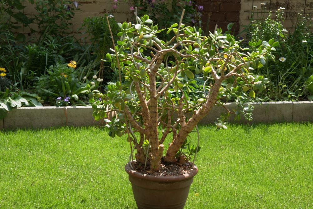 Alte pflanzen zuhause treffpunkt stammtisch green24 for Pflanzen zuhause