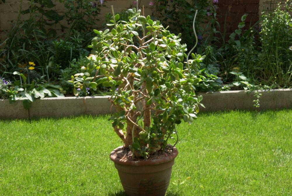 alte pflanzen zuhause treffpunkt stammtisch green24 hilfe pflege bilder. Black Bedroom Furniture Sets. Home Design Ideas