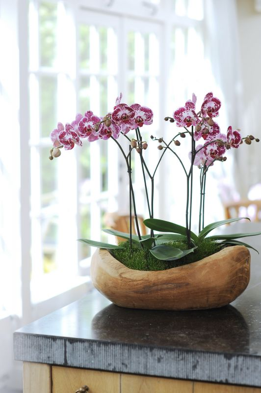 Frank 39 s natur pflanzen blog it s my live - Orchideen deko ...