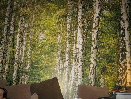 wand selber gestalten wohnen einrichten green24 hilfe pflege bilder. Black Bedroom Furniture Sets. Home Design Ideas