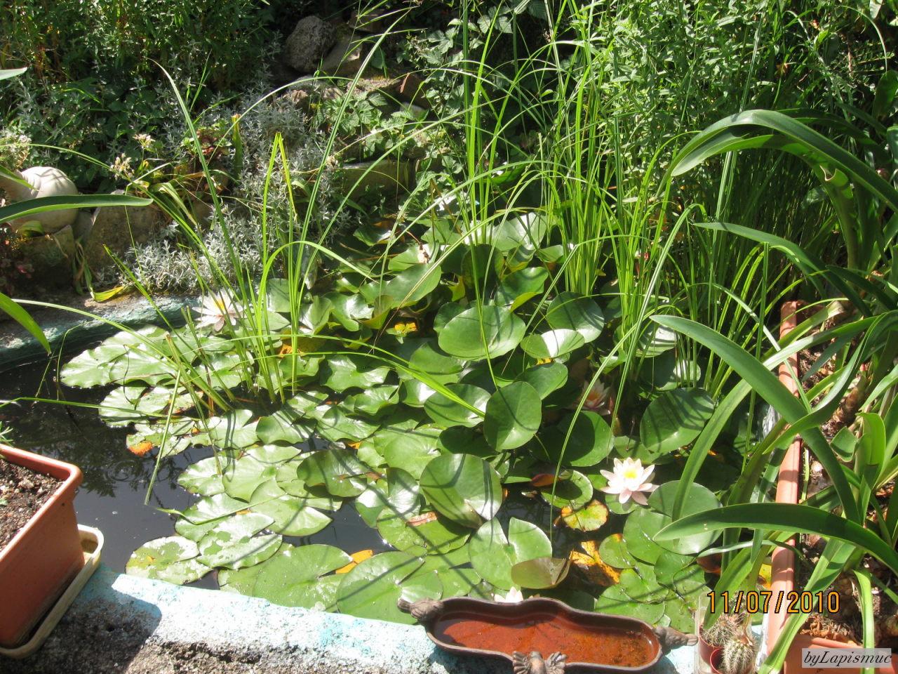 Lapismuc 39 s greene oase garten 2010 meine kleine welt for Goldfische im miniteich