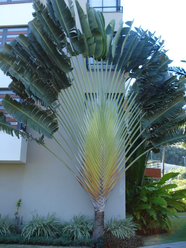 teil 2 pflanzen in fr nz sisch polynesien green24 hilfe pflege bilder. Black Bedroom Furniture Sets. Home Design Ideas