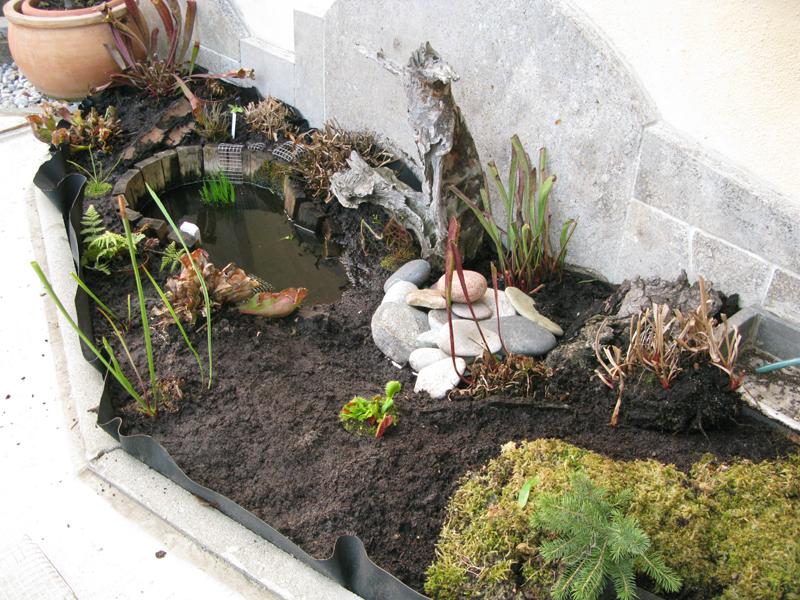 ace 39 s karnivorenblog der blog rund um fleischfressende pflanzen. Black Bedroom Furniture Sets. Home Design Ideas