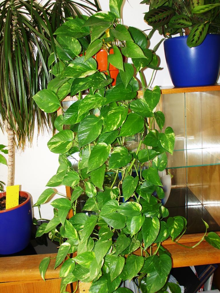Самые красивые комнатные растения и цветы Виды Описание