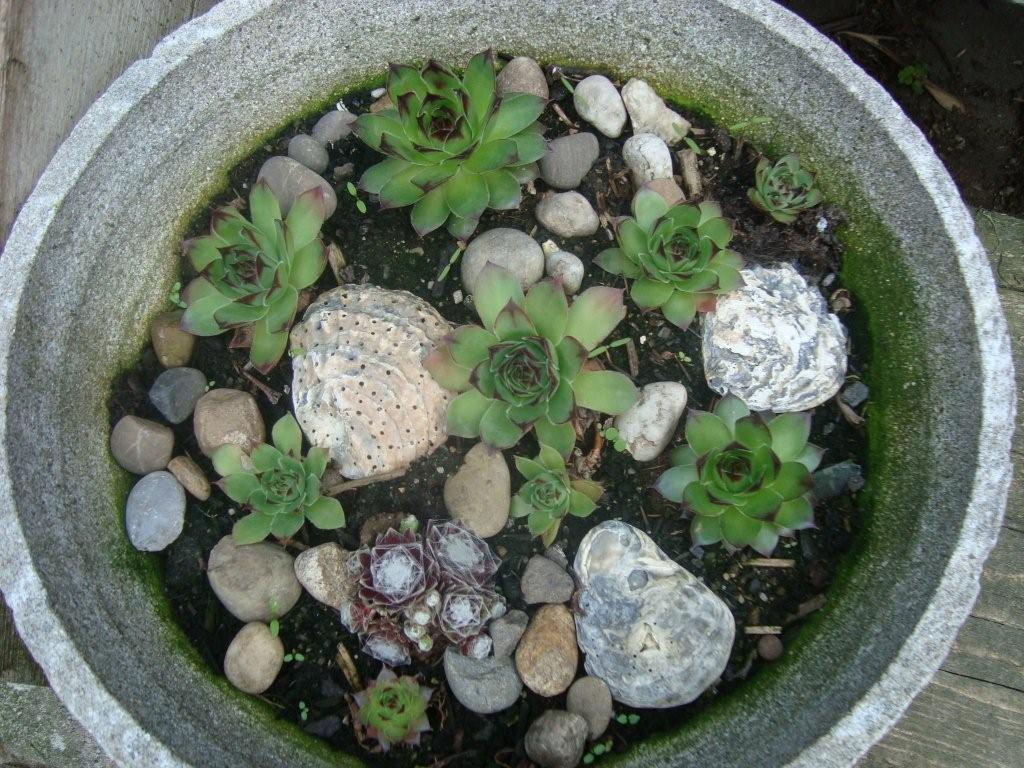 ruth 39 s blog neue pflanzen neue aussaaten gr n ist die farbe der hoffnung. Black Bedroom Furniture Sets. Home Design Ideas