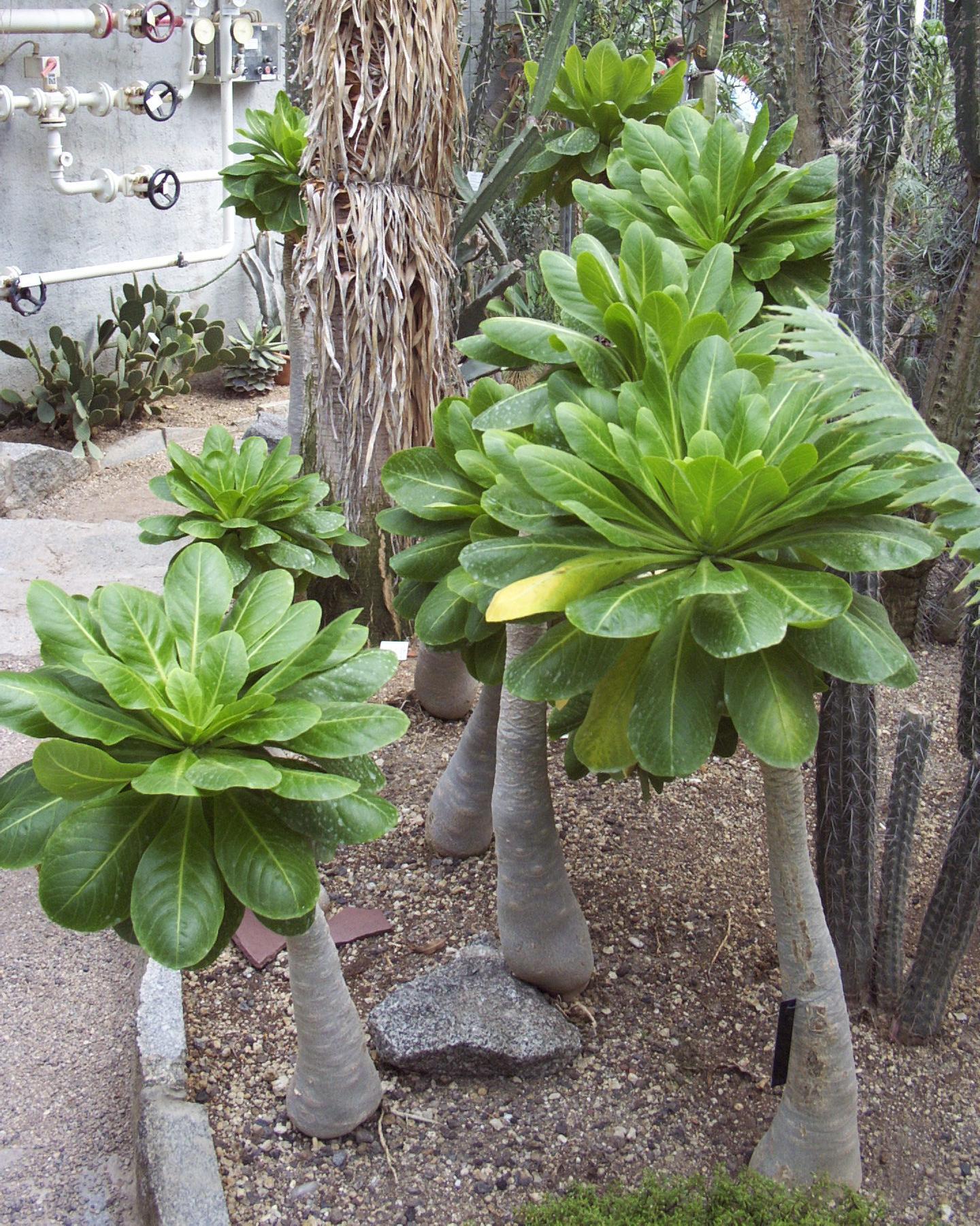 botanischer garten heidelberg green24 hilfe pflege bilder. Black Bedroom Furniture Sets. Home Design Ideas