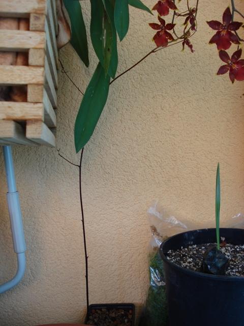 Gysmo 39 s gr ne welt vom samen zur pflanze - Duschvorhang mit orchideen ...
