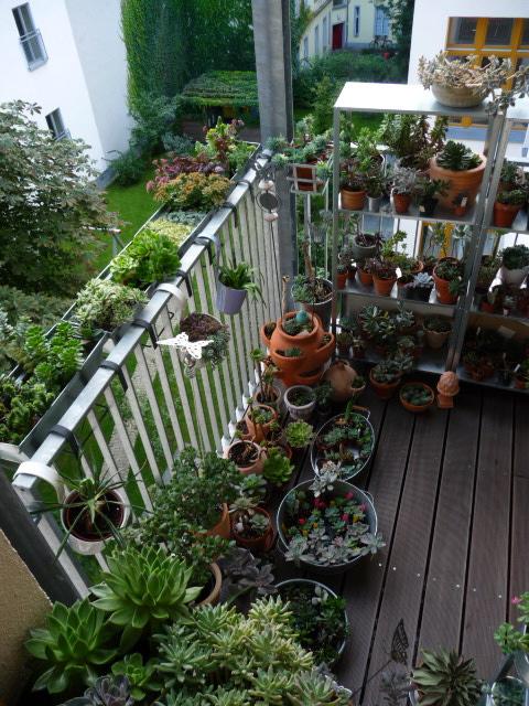 sukkulenten balkon pflanzen f r nassen boden. Black Bedroom Furniture Sets. Home Design Ideas