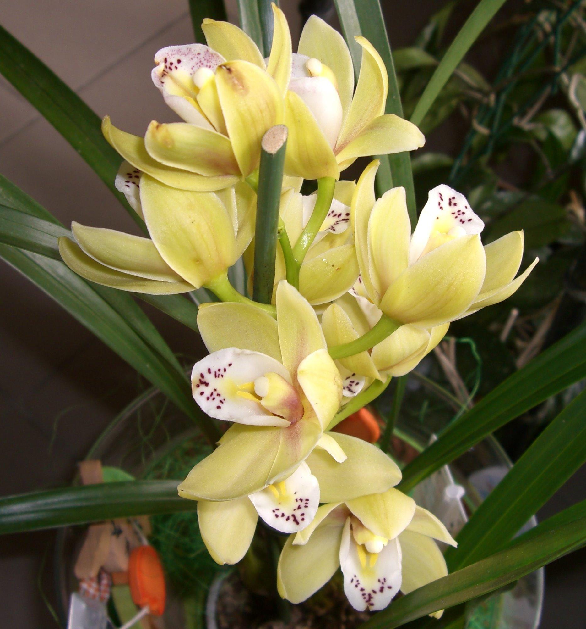orchideenfotos treffpunkt stammtisch green24 hilfe pflege bilder. Black Bedroom Furniture Sets. Home Design Ideas