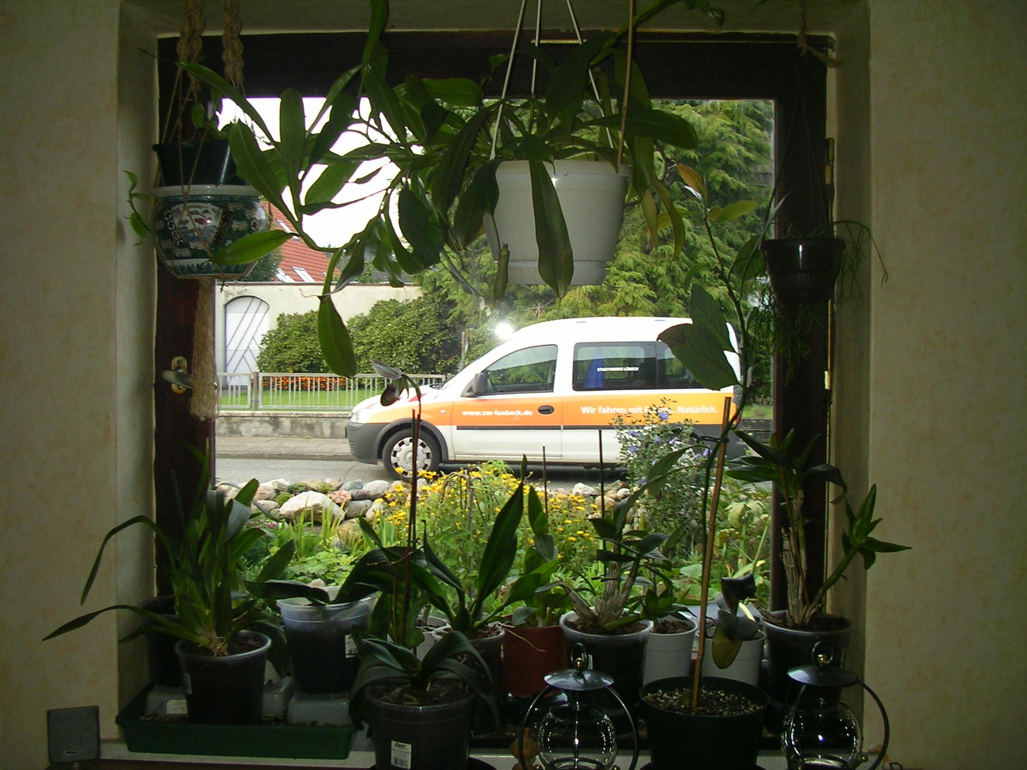 Baumsuche   pflanzenbestimmung & pflanzensuche   green24 hilfe ...