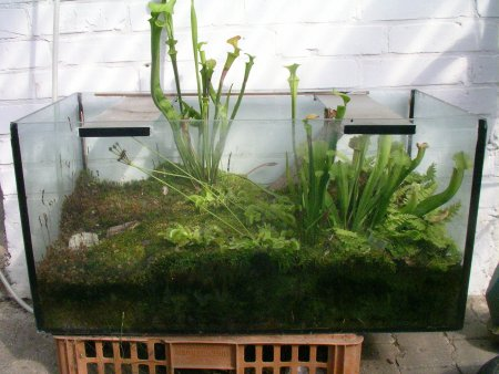 Gartentagebuch von rose23611 willkommen in meinem for Aquarium im teich