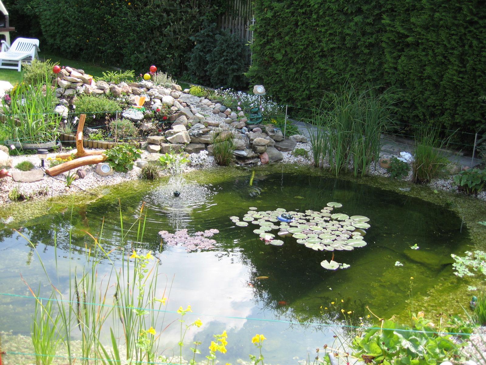 Hirschi 39 s blog willkommen in meinem blog for Gartenteich umrandung