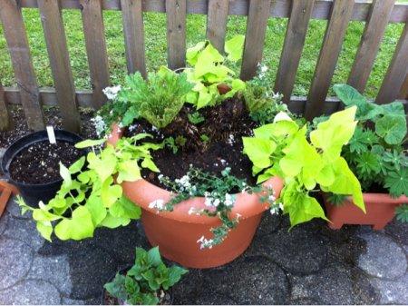 heimische pflanzen green24 hilfe pflege bilder. Black Bedroom Furniture Sets. Home Design Ideas