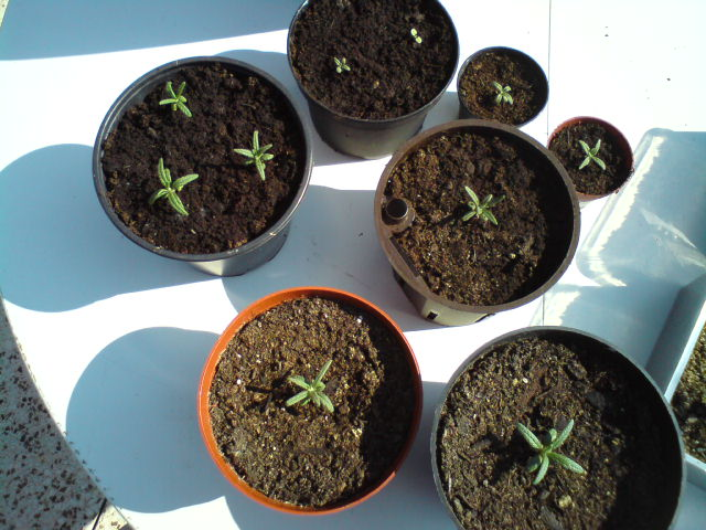 Maike09 39 s blog zimmerpflanzen und gem segarten for Zimmerpflanzen umpflanzen